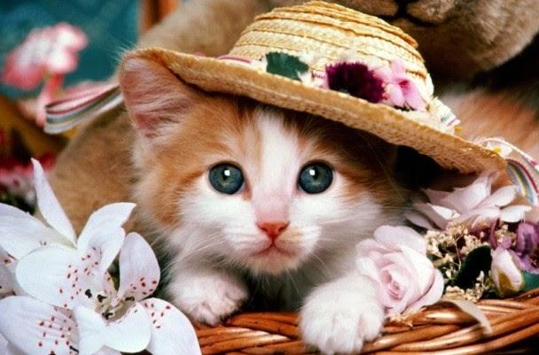 Sensoris Kumis Kucing