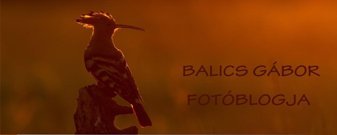 Balics Gábor fotóblogja