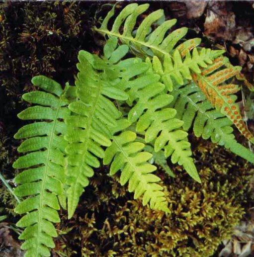 Leologia Reino Plantae