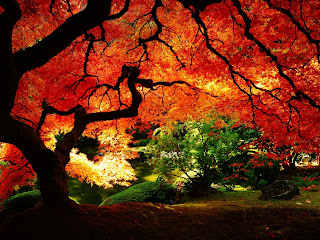 Red Leaves Lake Autumn HD Wallpaper