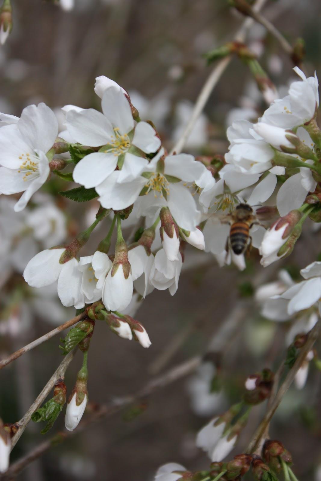 Garden Thyme With The Creative Gardener Garden Blogger S