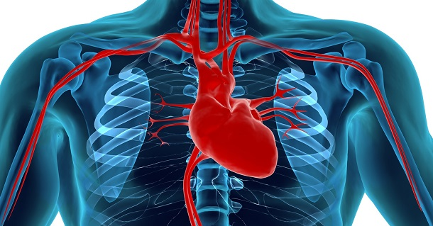 11 fatos surpreendentes sobre o sistema circulatório