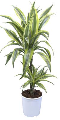 Je mets quelle plante dans mon salon la vida - Plante de salon ...