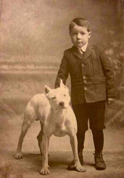nanny dog The staffordshire bull terrier is a medium-sized, short-coated breed of dog of english lineage and may be considered to be within the pit bull type.