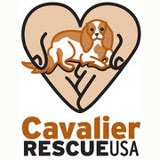 Volunteer for Cavalier Rescue USA