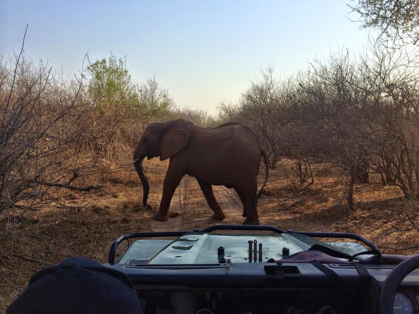 Elephant crossing - Matusadona National Park, Zimbabwe