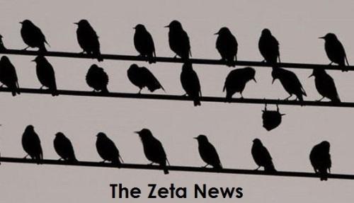 The zeta news