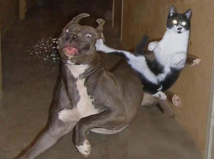 gambar gambar kucing lucu
