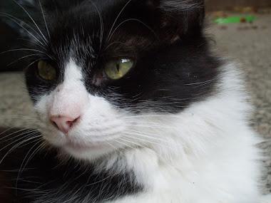 Mi gato Miyavi