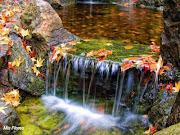 La belleza del otoño