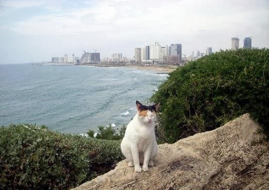 Tel Aviv Israel cat
