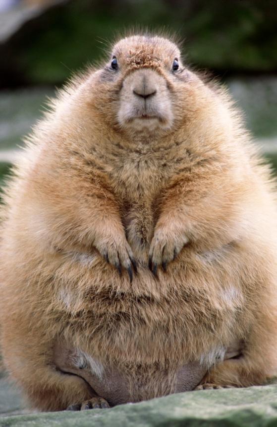 Frugal Poet's Guide to Life: Punxsutawney Phil Groundhog Day Poem