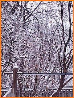 Trees and fence covered in snow.
