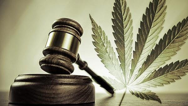 legalização da cannabis medicinal