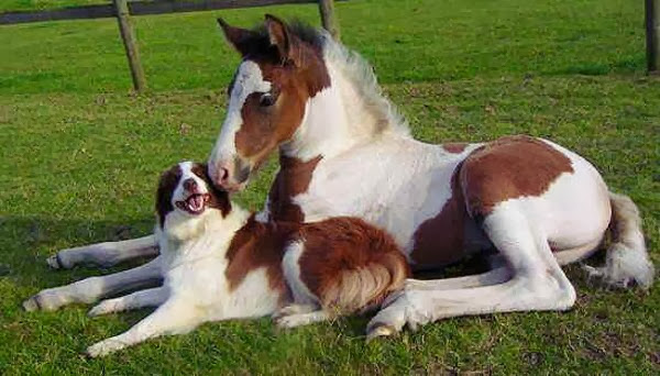 Funny animals of the week - 3 January 2014 (40 pics), horse and dog friends