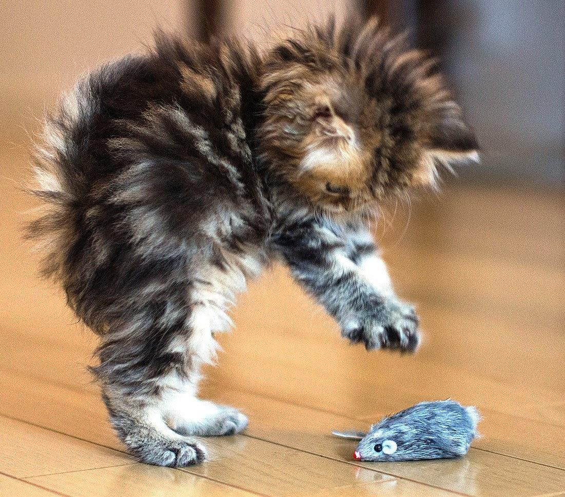 De beste verzameling van grappige foto's: grappig plaatje kat muis ...: grappige-fotos.blogspot.com/2014/07/grappig-plaatje-kat-muis-hond...