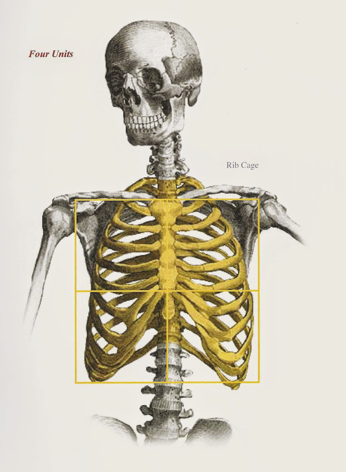 Studio Incamminati Blog On Proportion And Using The Cranial Index