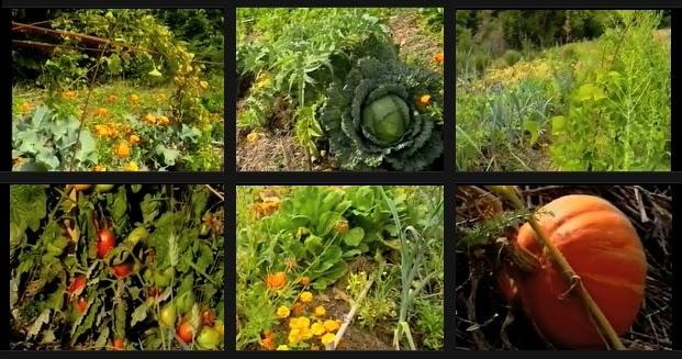 Le jardin autonome permaculture et vie en autarcie for Rendement permaculture