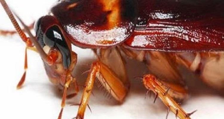 التخلص من الصراصير نهائيا بـطرق سهلة و فعالة