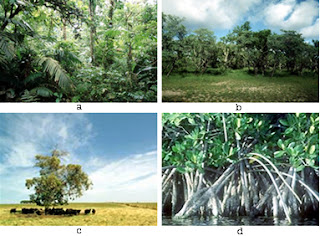 Distribution Flora Diversity in Indonesia