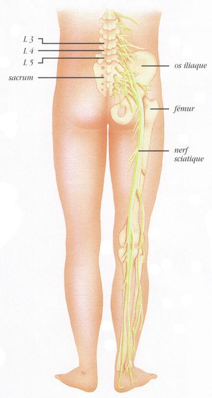 Blog 75 infos sant kin ost o nerf sciatique for Douleur sur le cote exterieur du pied