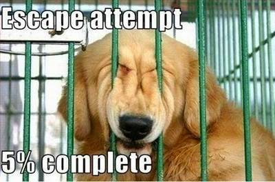 Dog-trying-to-escape-from-cage-jail