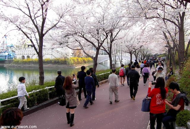 Coreanos disfrutando de las flores de cerezo en Jamsil