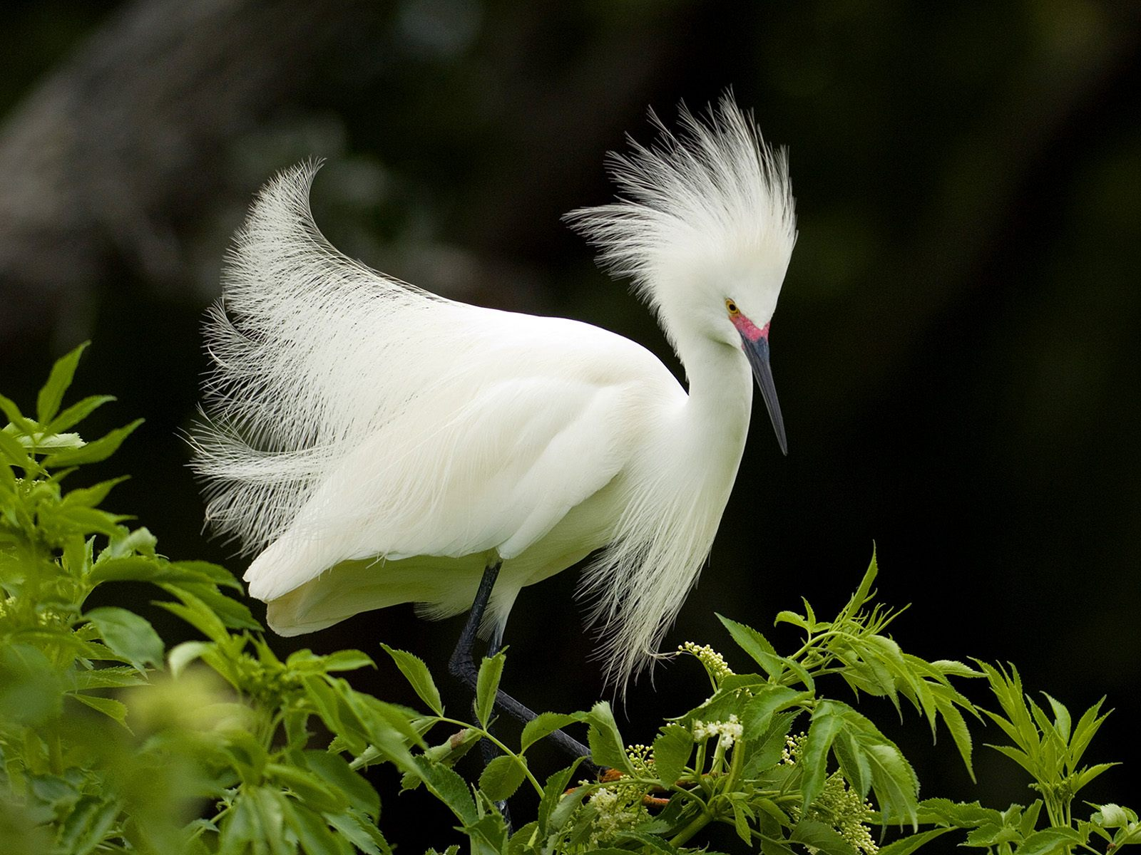 Wallpaper download online - Latest Birds Wallpapers Download Online Birds Wallpapers Online Birds Wallpaper