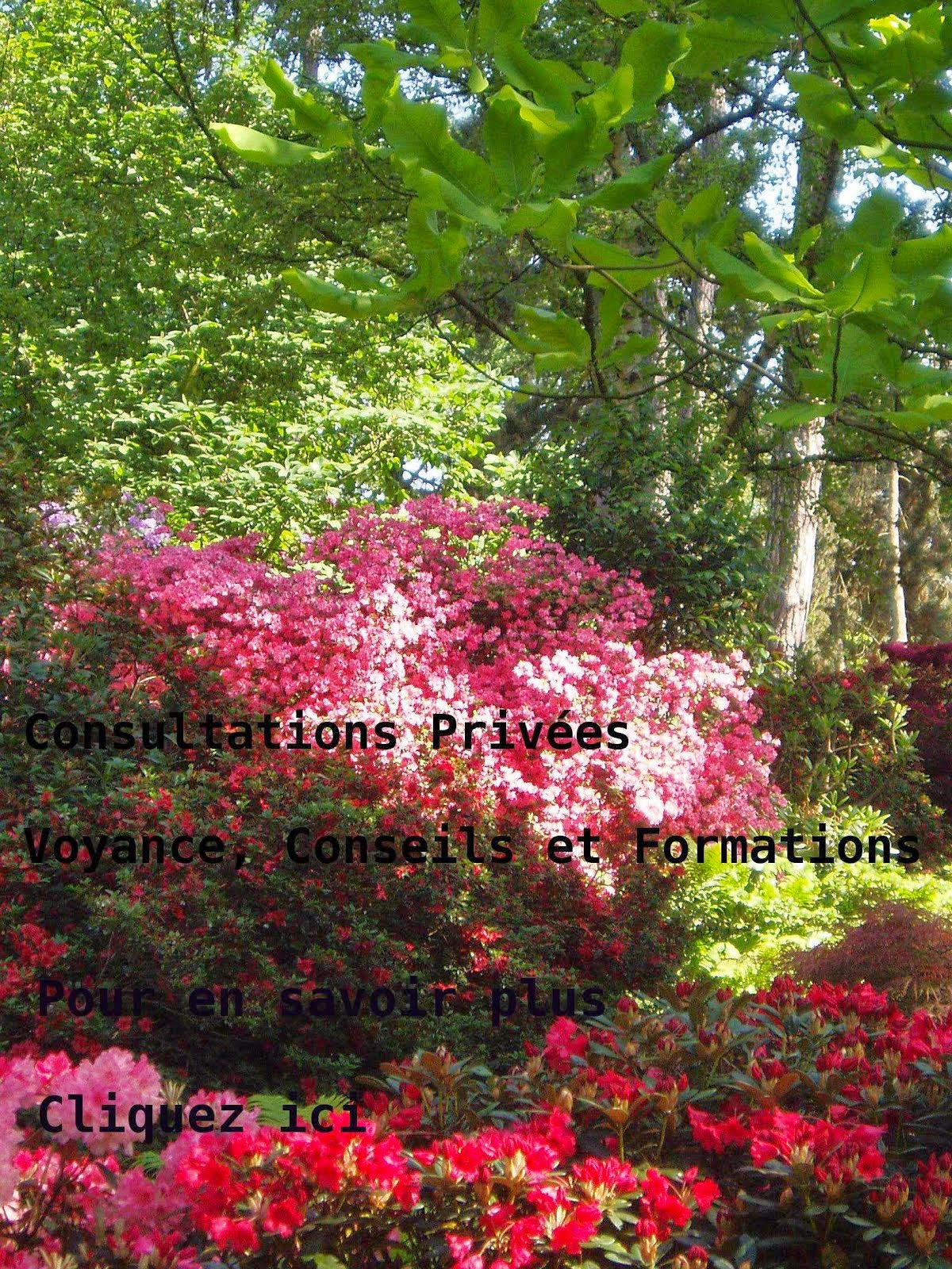 Intuition and Co - Kathy Hanke - Consultations et Formations