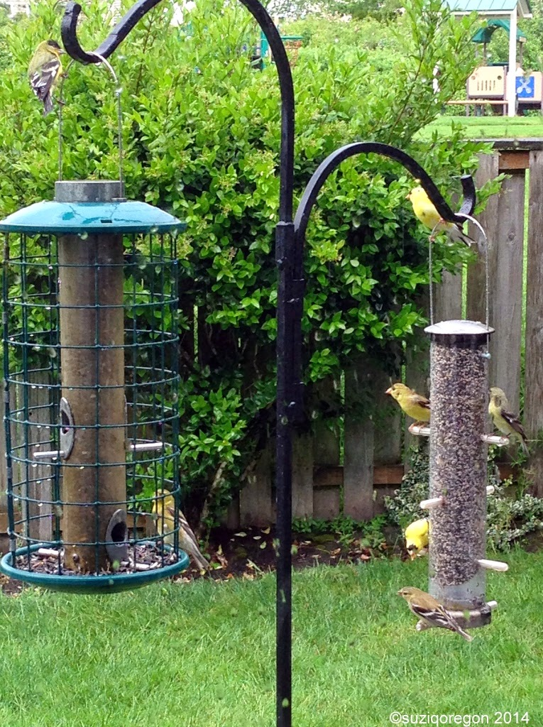 busy bird feeders