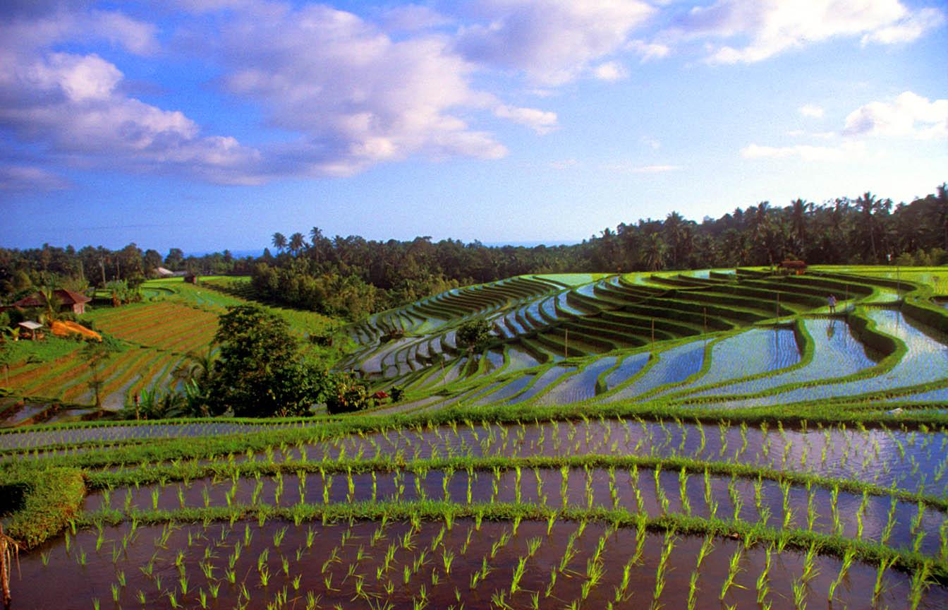 Bali indonesia tourist destinations for The terraces 2