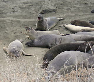 seals on ca1