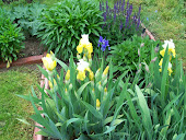Another picture of the Irises