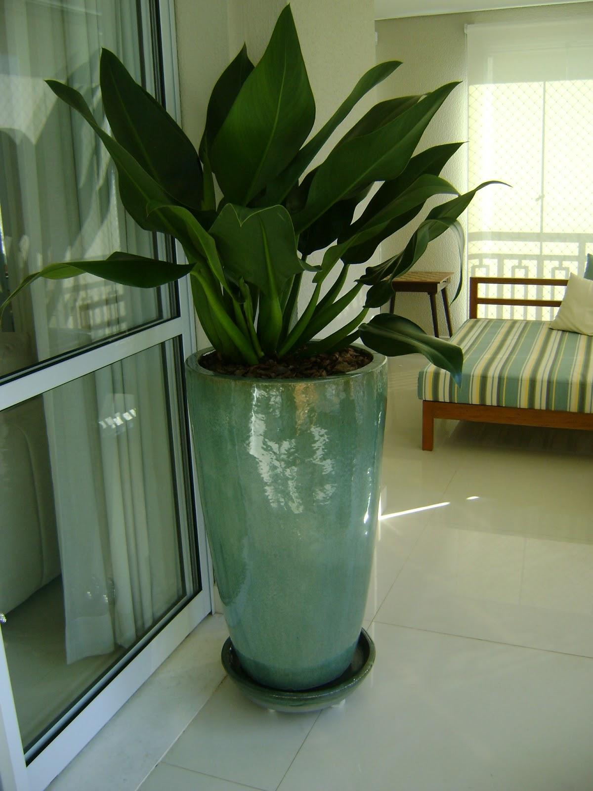 Mc3 arquitetura paisagismo a beleza dos vasos vietnamitas - Plantas grandes para interiores ...
