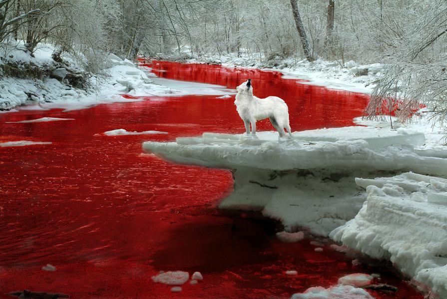 Llegará la sangre al río? BloodRiverWolf