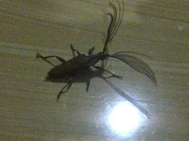 kumbang Bulu Mata Anti Badai Syahrini