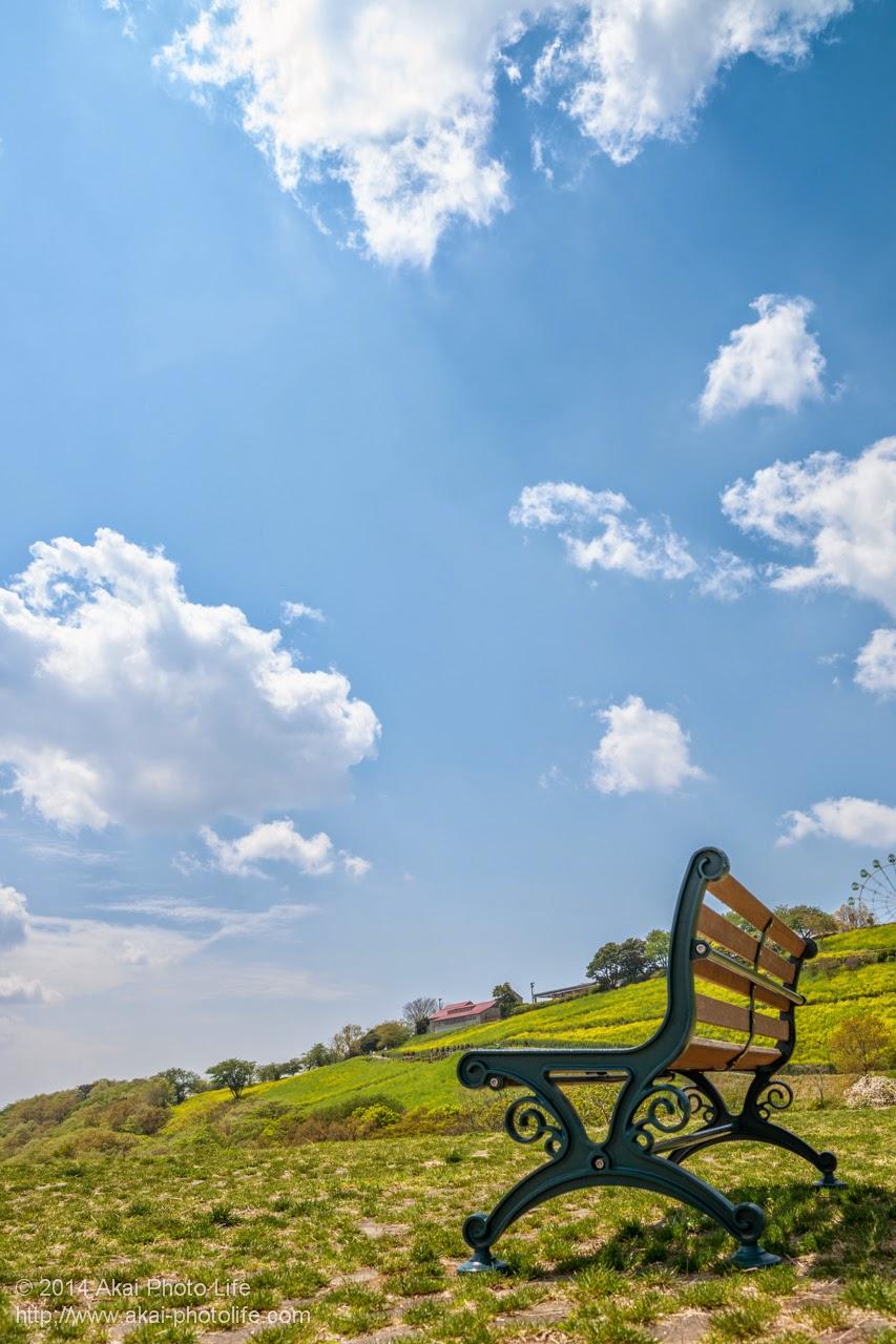 マザー牧場、青空と自然を見ながら休めるベンチ