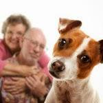 La présence d'un chien diminue la pression artérielle