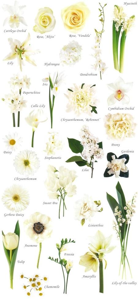 vita blommor, färgkarta blommor, vita blommor till bröllop