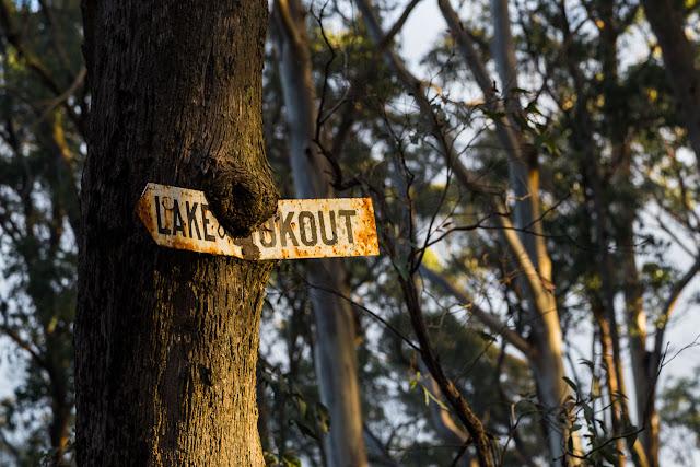 overgrown sign on tree