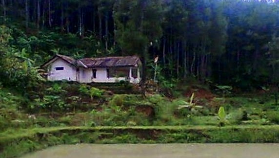 Tempat Wisata di Purworejo Wisata Alam Hutan Purworejo