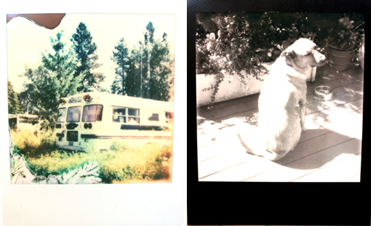 impossible polaroid film