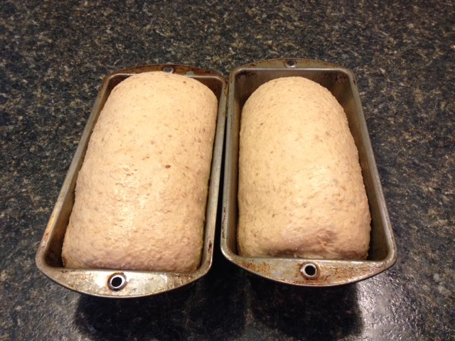 9 Grain Whole Wheat Bread Rising