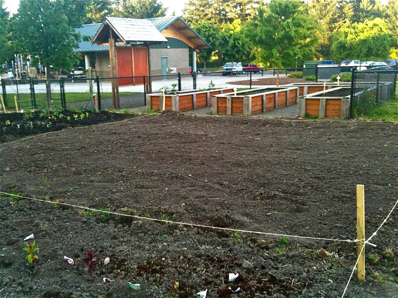 gravy lessons Reflecting Back on My Community Garden Plot