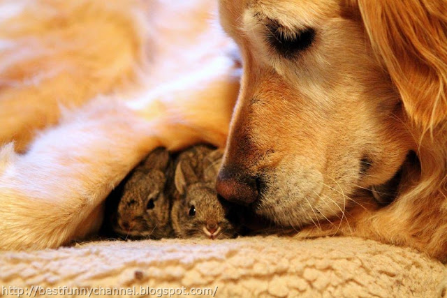 Dog and bunnies.