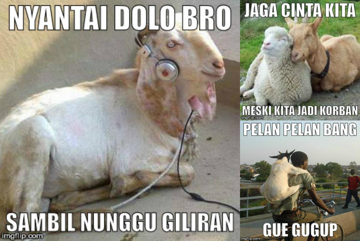 Foto Meme Qurban Lucu