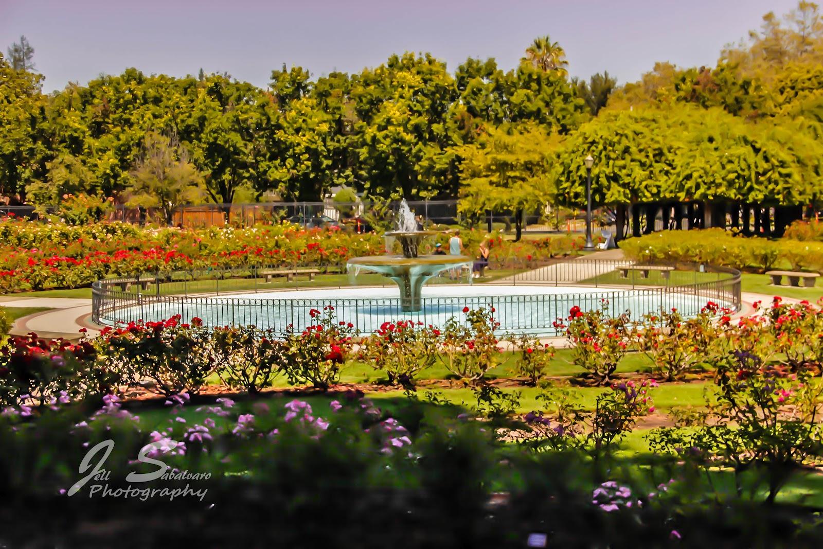 Jell Sabalvaro Photography Municipal Rose Garden San
