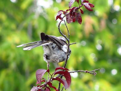 mystery bird under tail