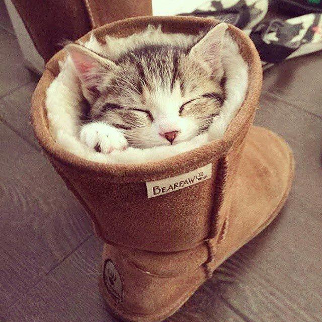 Смешные коты которые спять где хотят (21 фото)