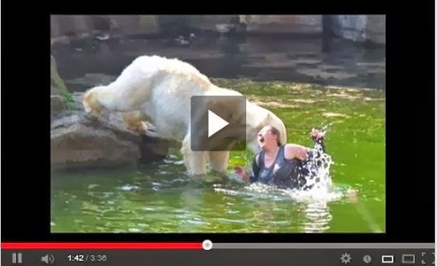 Polar Bear Attack Zoo